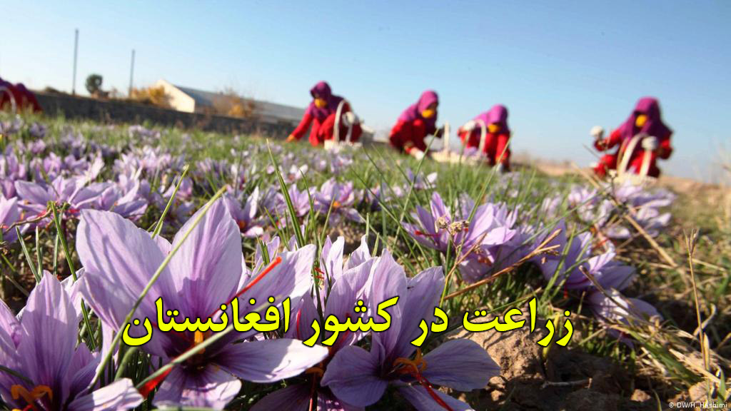 Afghanistan-agriculture