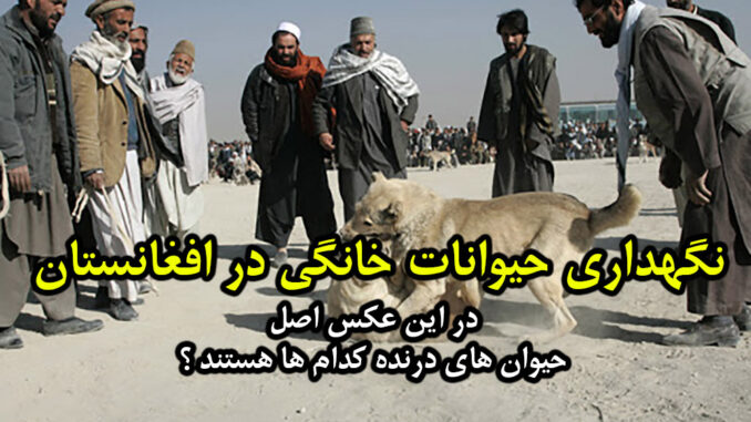 Afghanistan-dogs